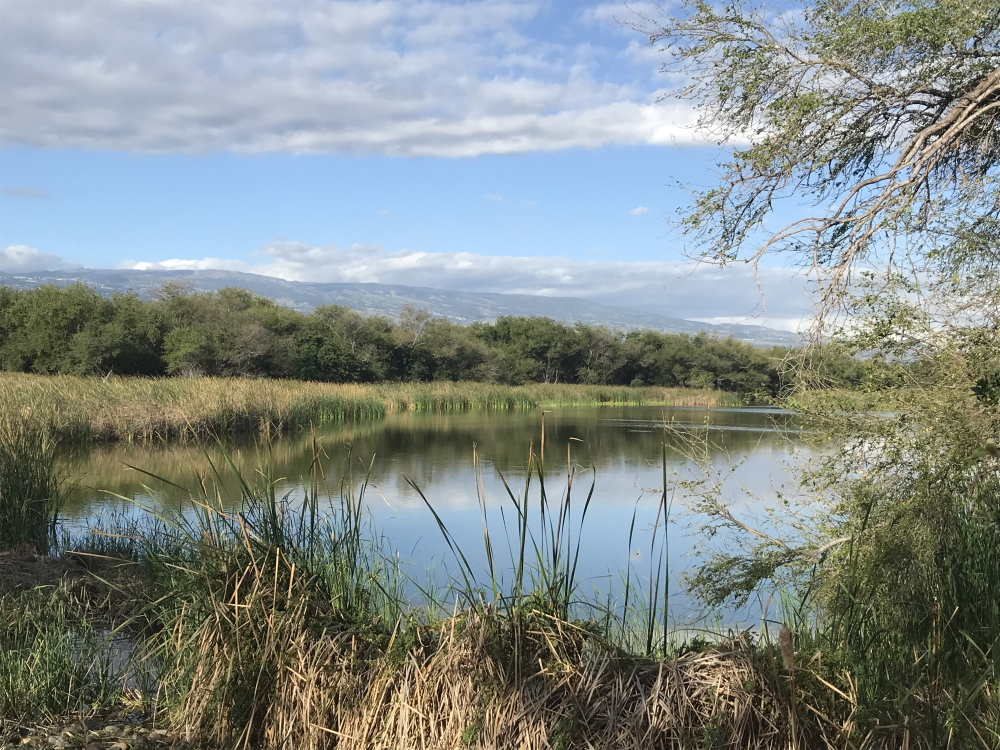L'étang du Gol - Les anciennes gravières du Gol - vue sur Les Makes