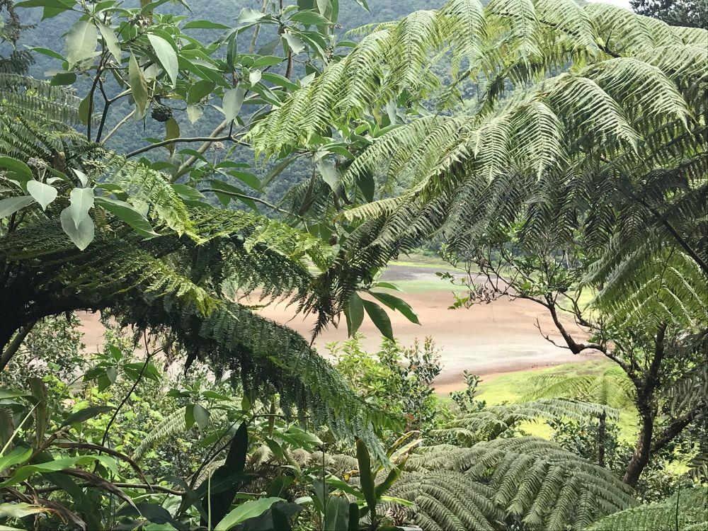© Destination974 | Blog Randonnées à La Réunion pour famille - Île de la Réunion. Randonnée Grand Etang et les cascades du Bras d'Annette